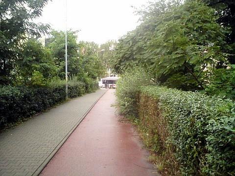 Radom, krzaki przy drodze rowerowej ostrzyżone do połowy