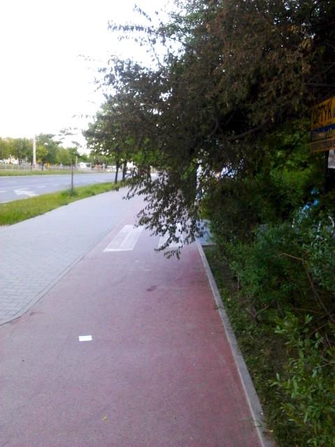 Gałęzie w skrajni drogi rowerowej - Radom ul. Grzecznarowskiego