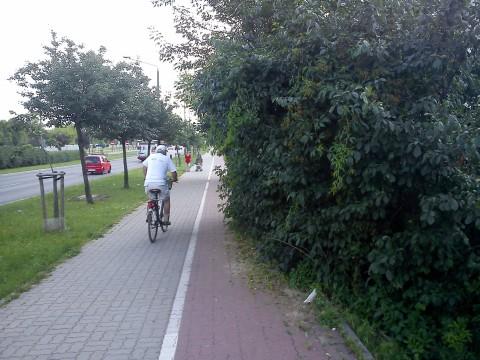 Radom. Droga rowerwa na ul. Chrobrego zarasta gałęziami