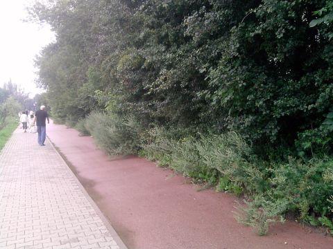 Radom. Krzaki zarastają droge dla rowerów