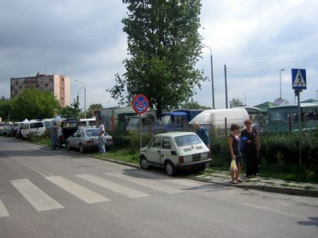 Radom. Łoś na ul. Śląskiej